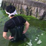 【訪問レポ1】三河一色うなぎの養殖池は緑色!?