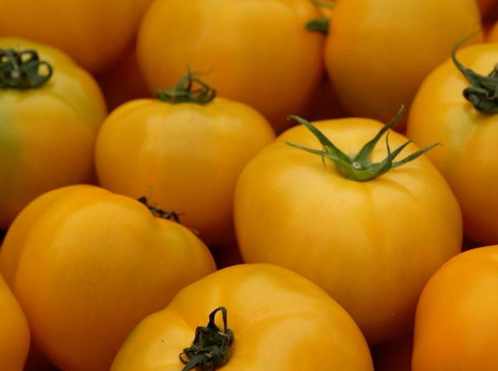 黄色のトマト