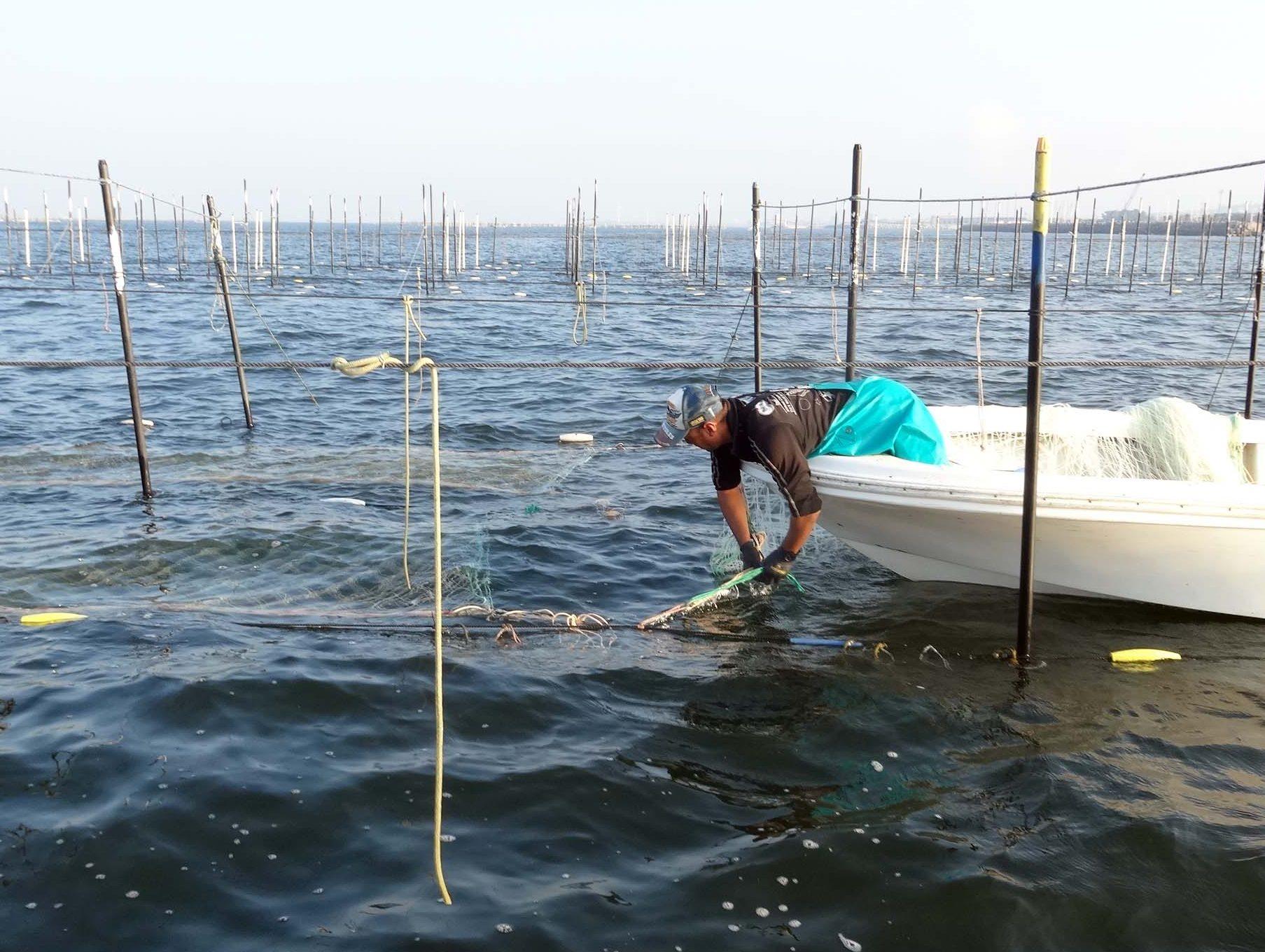 海苔網の張り込み