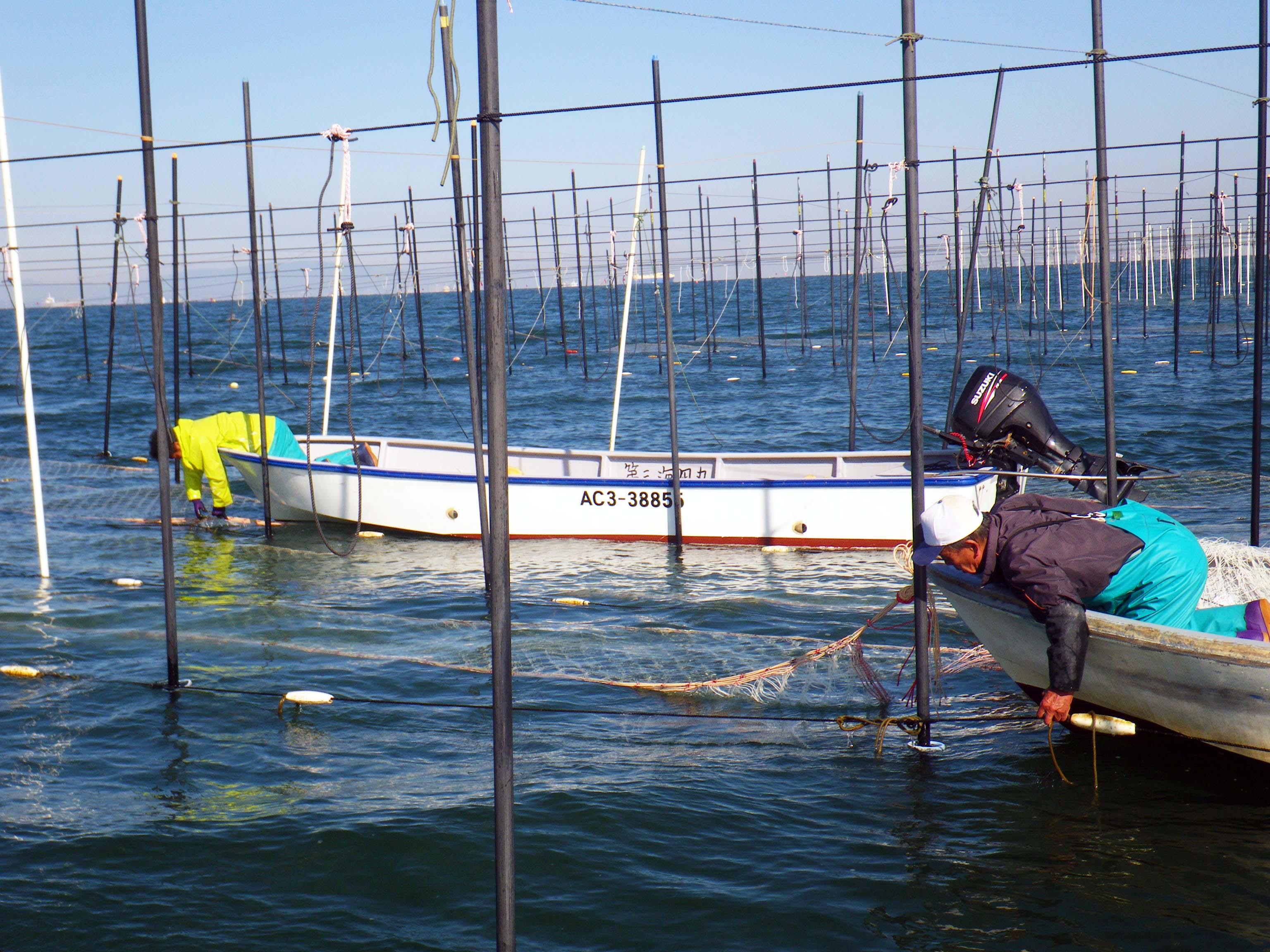 海苔網の張り込み2