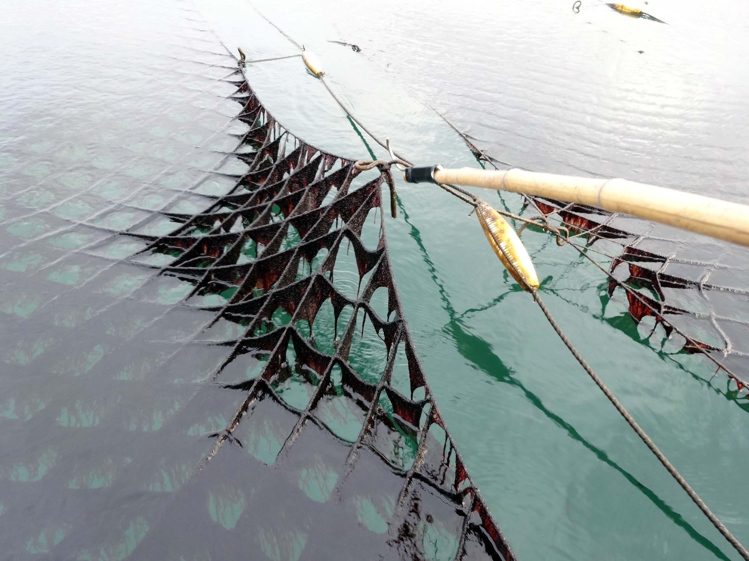 浮き流し式の海苔