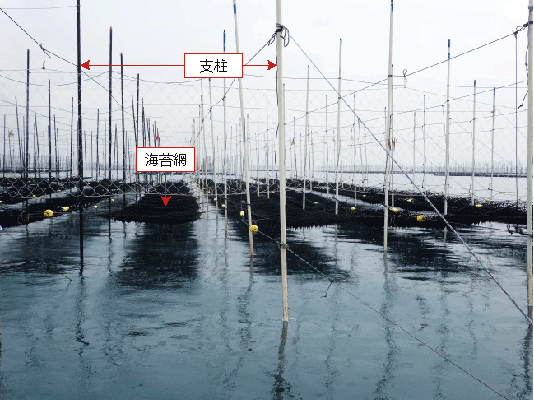 支柱式の養殖の様子