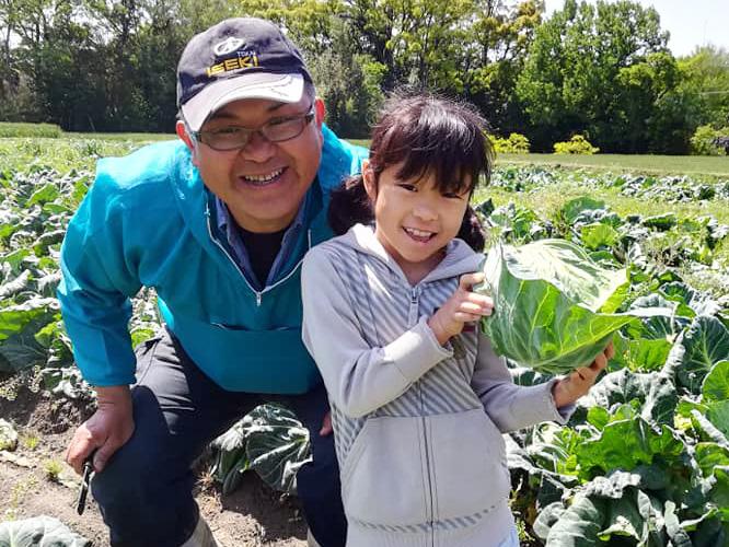 キャベツを収穫する子供