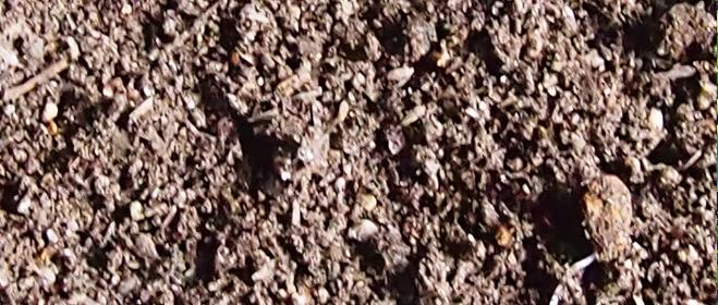鶏糞が入った土